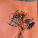 Fleur-AnnaG