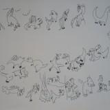 11. L'évolution des dinosaures