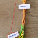 14 un neurone