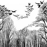 arbres et vol d'oiseaux