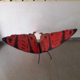 Papillon de Boun Mat La gragnotte Argeles sur mer