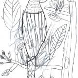 dessin_paul.jpg