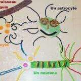 24 neurone et astrocytes