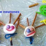 7 des têtes de neurones et un oligodendrocyte